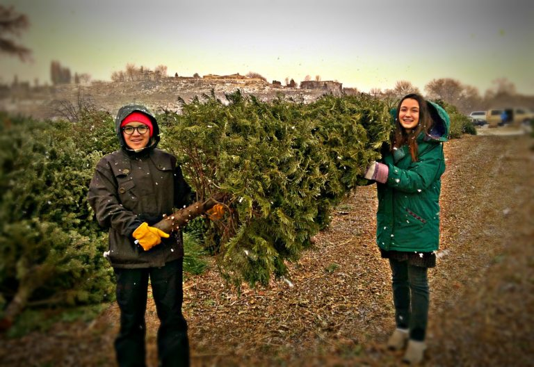 Recycle Your Christmas Tree At 6 Locations