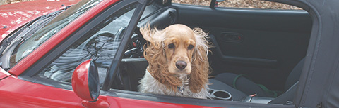dog-in-car.jpg