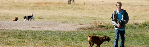 rancho_dog_park.jpg